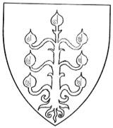 chêne-2